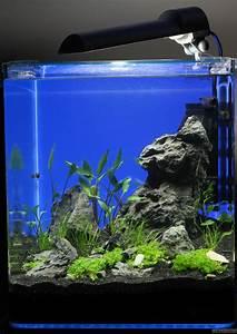 Co2 Rechner Aquarium : nano cube 30l flowgrow aquascape aquarium database ~ A.2002-acura-tl-radio.info Haus und Dekorationen