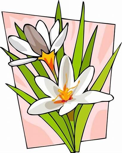 Pretty Clip Flower Clipart Flowers Cliparts Single