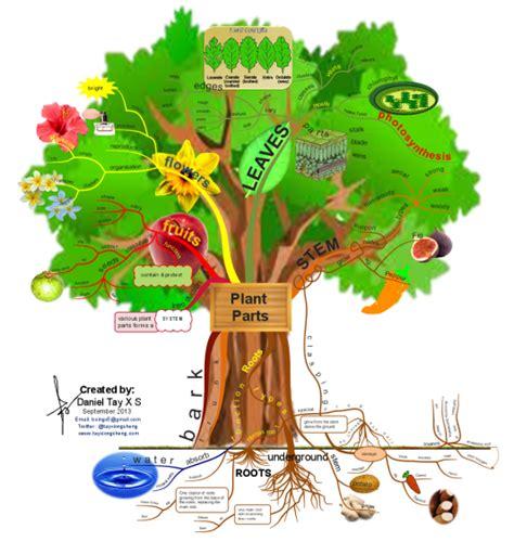 imindmap plant parts mind map biggerplate