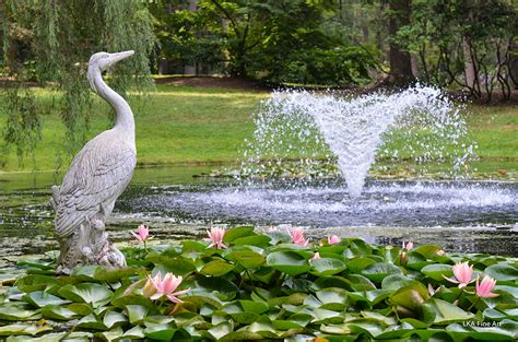 Lotus Garden Hours by The Lotus Garden Wickham Park