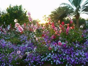 Garten Blumen Bilder : bild blumengarten zu hotel m venpick resort el quseir in el quseir ~ Whattoseeinmadrid.com Haus und Dekorationen