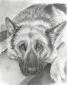 German Shepherd Drawing by Heather Gessell