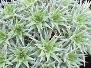 terbaru aneka jenis tanaman hias daun outdoor  mempesona