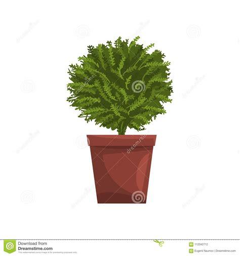 Piante Per Interno Casa Pianta Dell Interno Verde Della Casa In Vaso Marrone