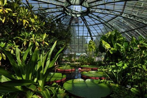 Bruno Erny Botanischer Garten Basel by Jardin Botanique De L Universit 233 De B 226 Le Rhine Valley