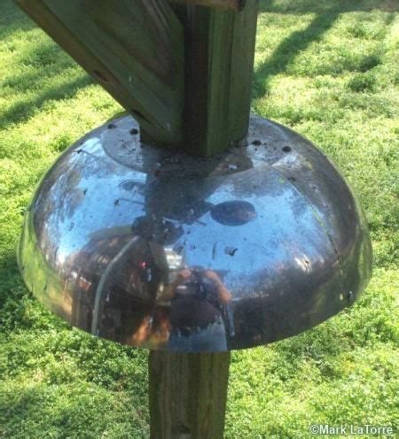 homemade squirrel baffle to keep squirrels out of your