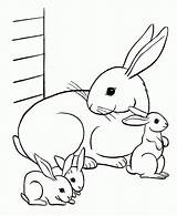 Coloring Animal Pages Animals sketch template