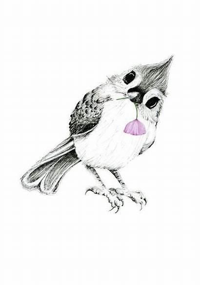 Bird Tattoos Tattoo Drawing Birds Drawings Jay