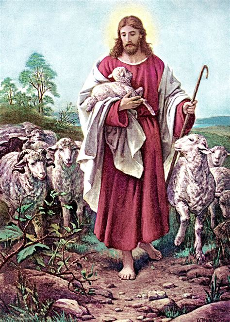 relationship   good shepherd   sheep