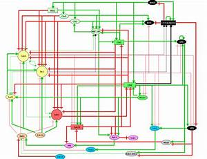 Logical Regulatory Graph For The Core Engine Controlling