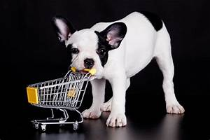 napa39s 7 favorite dog friendly stores With dog friendly stores near me