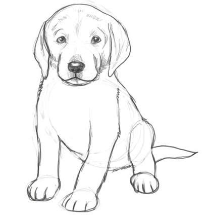 dog drawings  pencil easy  kids sketch coloring page