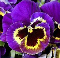 Résultat d'images pour les plus belles fleurs d'hiver