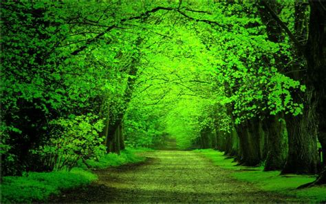 Green Forest Image Desktop by Green Forest Background Wallpapersafari