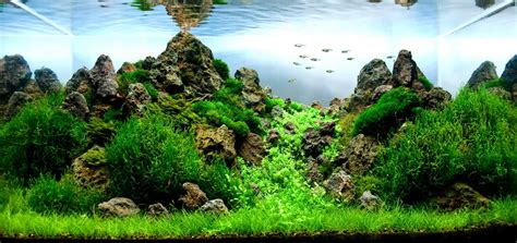 Aquascape Ideas Tropical by Manage Your Freshwater Aquarium Tropical Fishes And