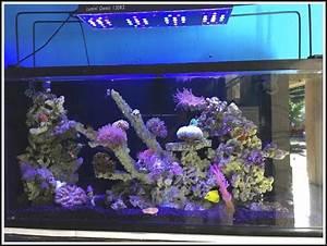 Aquarium Led Beleuchtung : aquarium led beleuchtung selber bauen meerwasser beleuchthung house und dekor galerie ~ Frokenaadalensverden.com Haus und Dekorationen