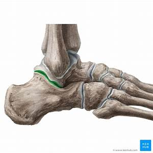Ankle joint: Anatomy, bones, ligaments and movements   Kenhub