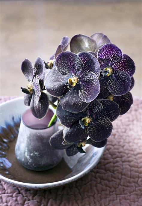 die orchidee toll  blumen machen
