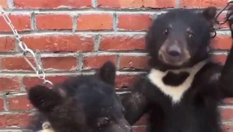 peta video shows horrific circus animals conditions