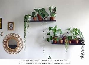 Anthurie Im Wasser : plant collector 4 justine coiffeuse senecio rowleyanus pilea figuier de barbarie pilea ~ Yasmunasinghe.com Haus und Dekorationen