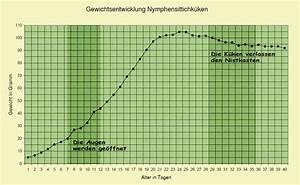 Idealgewicht Berechnen Alter : nymphensittichzucht die entwicklung von nymphensittichk ken ~ Themetempest.com Abrechnung