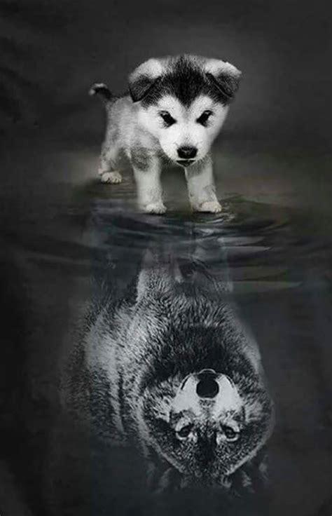 Wolf Wallpaper Kawaii by Comment Dessiner Un Chien Mignon G 233 Nial Ment Dessiner Une