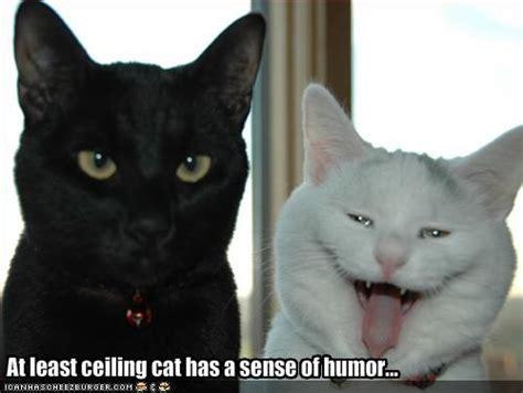 funny   funny cat  funny captions  cat