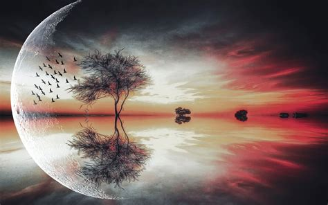 beautiful moon   tree wallpaper creative
