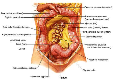 Artrite reumatoide - sintomas, causas