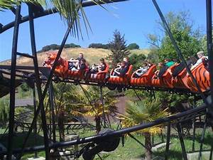 Oakland Zoo Tiger Coaster