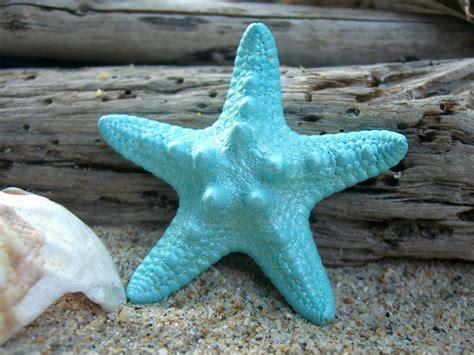 starfish hair clip pale aqua starfish hair accessories