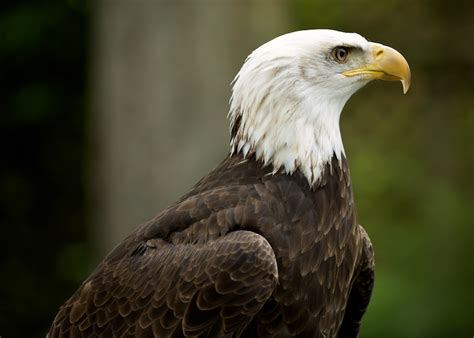 vancouver island birds of prey 187 victoria photographer portrait and event photography