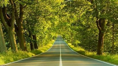 Forest Desktop Landscape Resolution Road Mobile Wallpapertag
