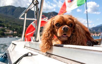 lago maggiore mit hund gardasee ferienhaus mit hund die besten ferienh 228 user und