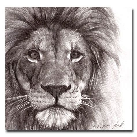 images  tattoos  pinterest lion tattoo