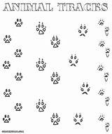 Coloring Footsteps Animal Tracks Pages Designlooter Print 1000px 13kb sketch template