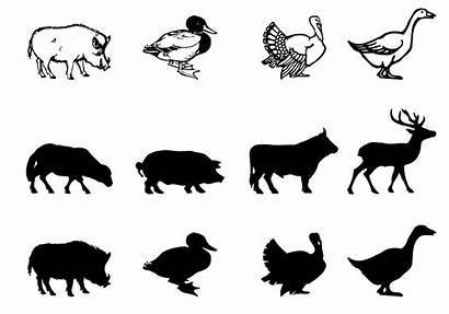 Farm Animal Vector Silhouettes Brushes Pack Icons