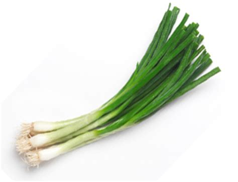 green onions ultimate stew fucking recipes