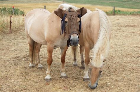 im sommer die augen der pferde schuetzen deganius kraeuter