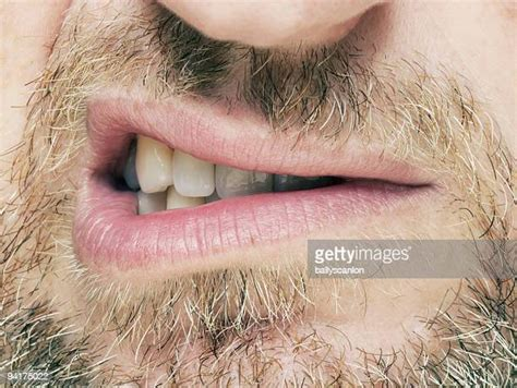 snarling   premium high res pictures getty images