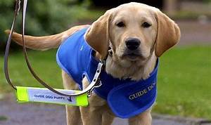 Muslim bus drivers' ban on guide dogs | UK | News ...