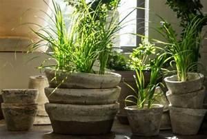 Pot Pour Plante Intérieur : la bonne forme de vos plantes d 39 int rieur entretenez et embellissez votre jardin avec mr bricolage ~ Melissatoandfro.com Idées de Décoration