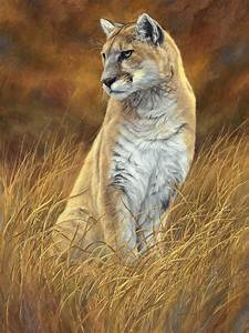 Mountain Lion Painting by Lucie Bilodeau
