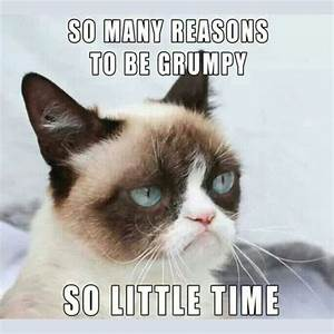 16 of the Best Grumpy Cat Memes - Catster