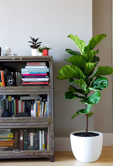 Interior Decoration Choosing The Right Indoor Plants