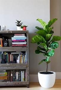 Interior decoration choosing the right indoor plants for Interior decor training