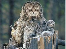 Cat Owls