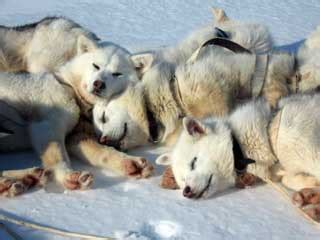 trail dispatch arctic bunny climate generation