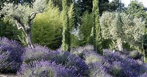 Mediterrane Pflanzen Winterhart : mediterrane pflanzen perfekt imitiert mein sch ner garten ~ Frokenaadalensverden.com Haus und Dekorationen