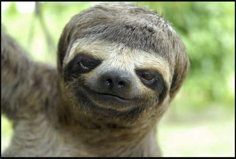 down syndrome sloth - TDF Blog